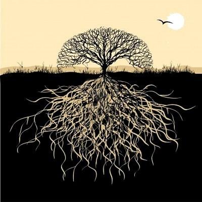 estação roots