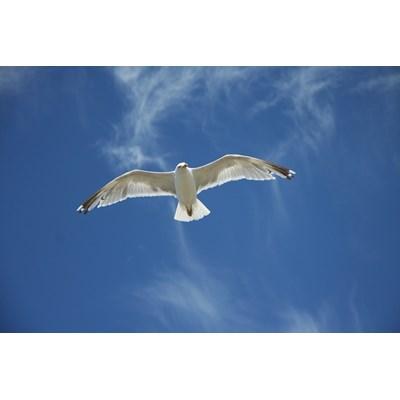 Vuelo solo pero vuelo libre