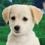 Apocalyptic Puppy